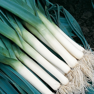 Picture for category Leek