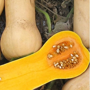 Picture for category Winter squash