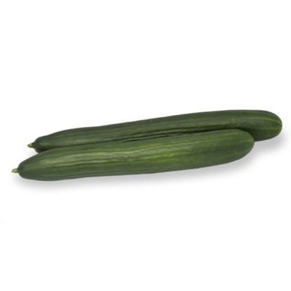 Picture of 'Avaya' cucumber untreated