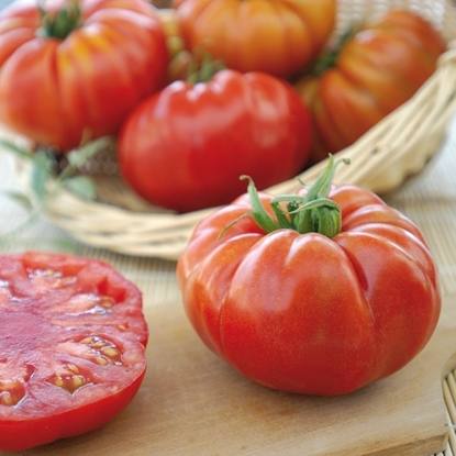 Picture of 'Marbonne' tomato untreated