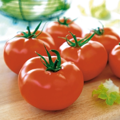 Picture of 'Brentyla' tomato untreated