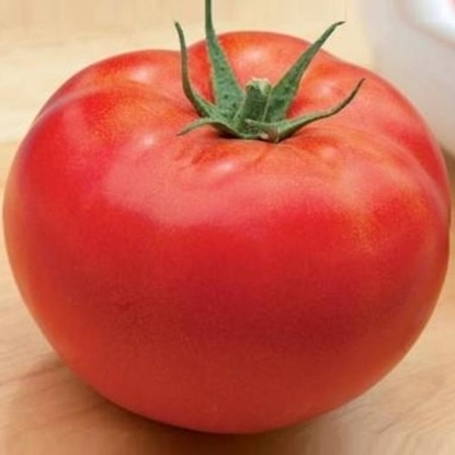 Picture of 'Baptysta' tomato untreated